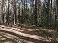 Лесные дорожки к Акуловскому.jpg