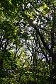 Лісові хащі заказника Осташки поблизу охоронного знаку.jpg