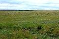 Оренбургская степь летней порой - panoramio.jpg