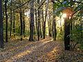 Осенний парк.JPG