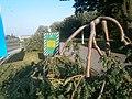 Парк Вічної Слави горобини-символ викривленої війною людських доль ....JPG