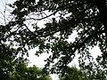 Парк шума Гази Баба во мај (102).JPG