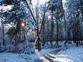 Парк 50-річчя взимку!.JPG