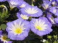 Растения в Седово 039.JPG
