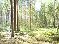 Урочищные места - panoramio (12).jpg