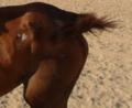 ساقا حصان 5.PNG