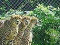 九州自然動物公園アフリカンサファリ2.jpg