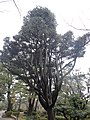 兼六園 - panoramio (34).jpg