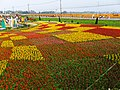 新社花海節 Xinshe Flower Carpet Festival - panoramio (2).jpg