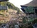 清水寺 Kiyomizu Temple - panoramio (1).jpg