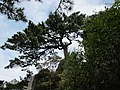 送客松 - panoramio.jpg