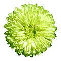 - Flower 14 -.jpg