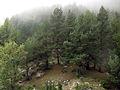 049 Bosc a la serra Pigota, des del castell de Lillet.jpg