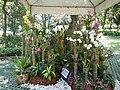 05593jfMidyear Orchid Exhibits Quezon Cityfvf 16.JPG