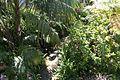 15 de abril 2016 Jardines de la Alameda de Gibraltar (4) (26168075250).jpg