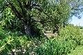 170618-04 das Trockenbett der Egau.jpg