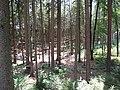 18.07.2015. Wildfreizeitpark Oberreith, 83567 Unterreit - panoramio (18).jpg