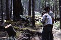 1972. Dave Johnson and Baker. Poria infected stand. Randle Ranger District, Gifford Pinchot National Forest, Washington. (35679347970).jpg