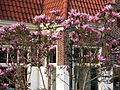 20110417 Lelystad; Bataviastad 14 Tree blossoms.JPG