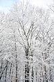 2011 snow february7 (5430882196).jpg