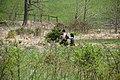 2016 BioBlitz Sky Meadows State Park (26539397801).jpg