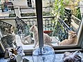 201909 cats at window sill.jpg