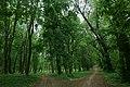 68-227-5024 Антонінський парк маєтку Потоцьких.jpg
