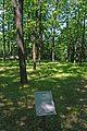 71-103-5003 Shevchenko Oaks SAM 7183.jpg