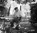 85 - letni Vincenc Trošt pri delu (f?žu utrgava), Duplje 1958.jpg