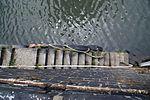 9696viki Port Miejski. Foto Barbara Maliszewska.jpg