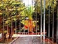A@a palm Trees Deftera village nicosia cy. - panoramio (3).jpg