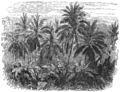AGTM D178 A tropical jungle.png
