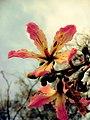 A Flower (43980330).jpeg