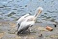 A Water Bird.jpg