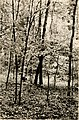 A comparison of small mammals of the deciduous forest and old field habitats of Sweet Briar, Virginia (1979) (20661343282).jpg