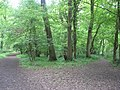 A fork in the path, Benting wood to the left, Home Grove to the right, bluebells everywhere - geograph.org.uk - 1292852.jpg