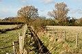 A newly-dredged ditch near Island Farm - geograph.org.uk - 1571694.jpg