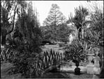 A scene in Botanic Garden with sculpure of man (3388852724).jpg