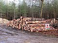 A stack of timber in Big Wood - geograph.org.uk - 1709672.jpg