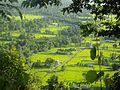 A view Sakphara, VDC, Ilam Nepal.jpg