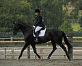 Abram Hall Dressage June 2011 (66a).jpg