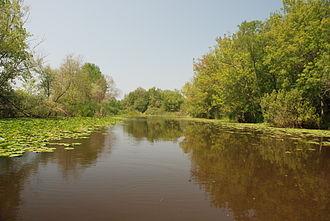 Acarlar Floodplain Forest - Lagoon and forest.