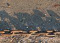 Aegina chain shadow.jpg
