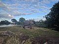 African Elephants (31664343682).jpg