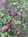 Alaska fall.jpg