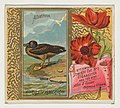 Albatross, from the Birds of America series (N37) for Allen & Ginter Cigarettes MET DP838960.jpg