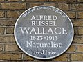 Alfred Russel Wallace plaque.jpg