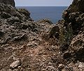 Allium lojaconoi Ghajn Tuffieha Malta 05.jpg