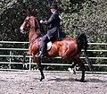 American Saddlebred5.jpg
