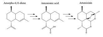 Amorpha-4,11-diene synthase - Figure 23 Amorpha-4,11-diene to Artemisinin